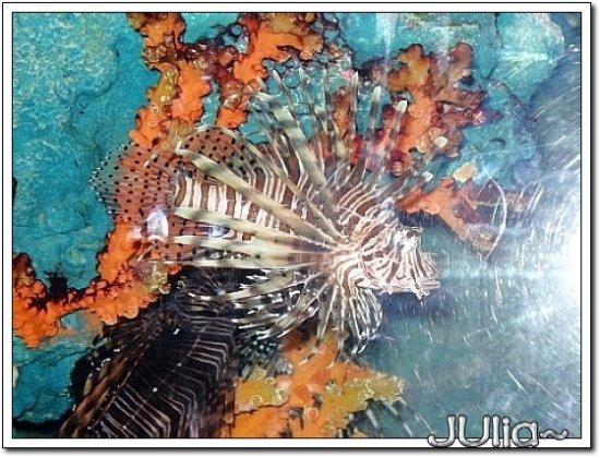 (泰國)海洋水族館 (11).jpg
