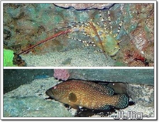 (泰國)海洋水族館 (16).jpg