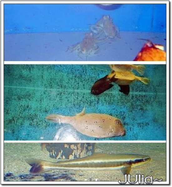 (泰國)海洋水族館 (17).jpg
