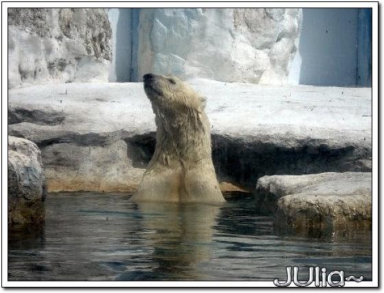 (泰國)賽福瑞世界.北極熊.jpg