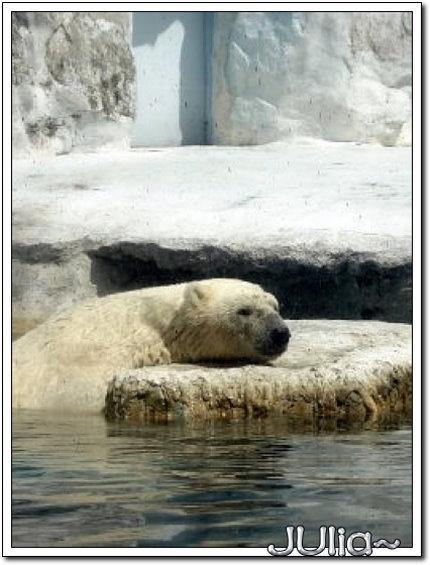 (泰國)賽福瑞世界.北極熊 (1).jpg