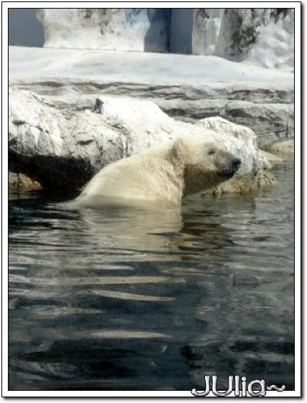 (泰國)賽福瑞世界.北極熊 (3).jpg