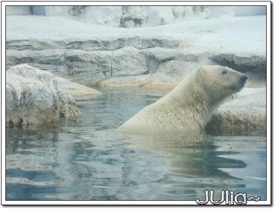 (泰國)賽福瑞世界.北極熊 (4).jpg