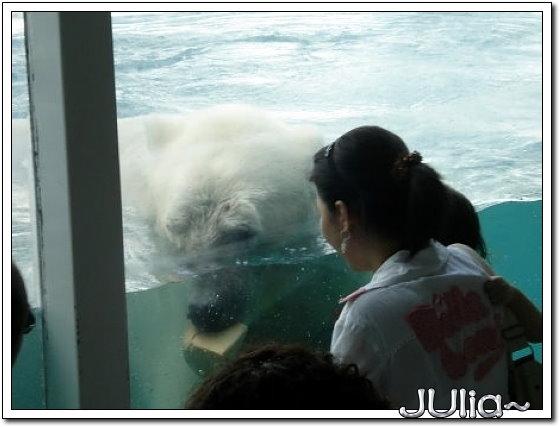 (泰國)賽福瑞世界.北極熊 (8).jpg
