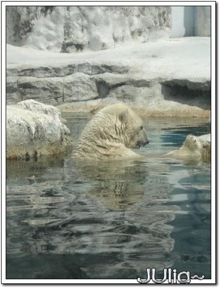 (泰國)賽福瑞世界.北極熊 (9).jpg