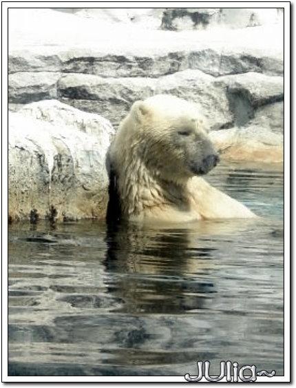 (泰國)賽福瑞世界.北極熊 (10).jpg