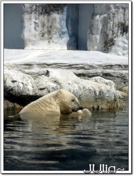 (泰國)賽福瑞世界.北極熊 (11).jpg