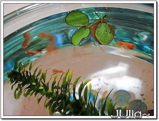 米老鼠魚 (10).jpg