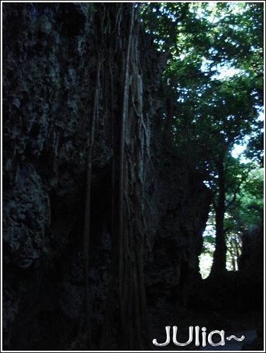 森林 (3).jpg