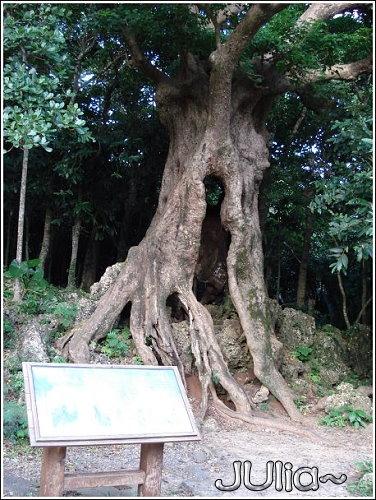 森林 (10).jpg