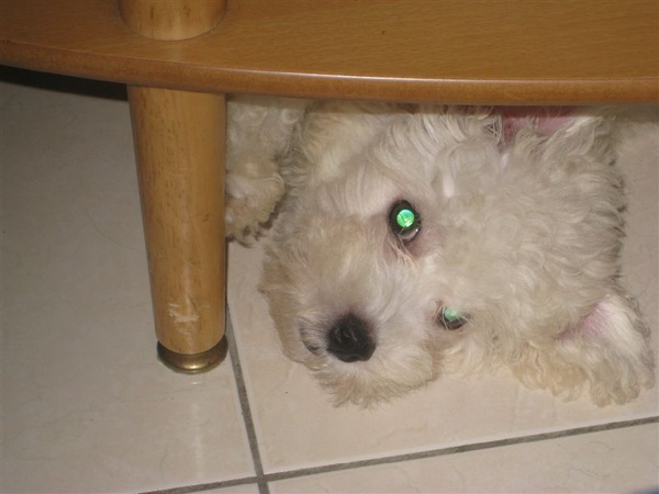 喜歡躲在桌子底下
