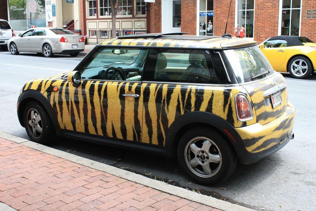 06 21 11 leopard car - redcued
