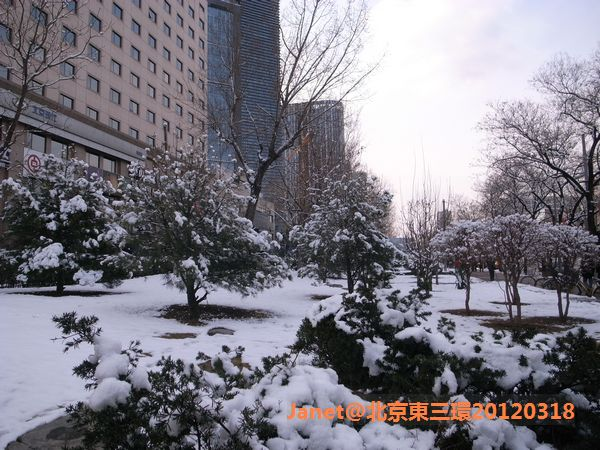 20120318 春雪