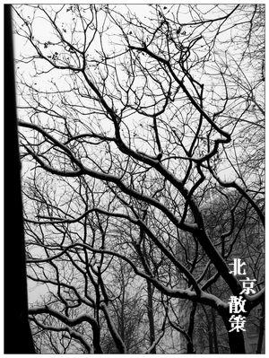 20121214晨走東三環農展橋邊近三里屯