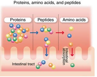 胺基酸 蛋白質.jpg