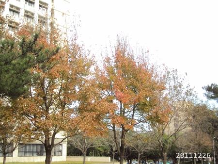 2011_Dec_019.JPG