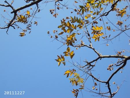 2011_Dec_020.JPG