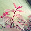 20120331_2_effected