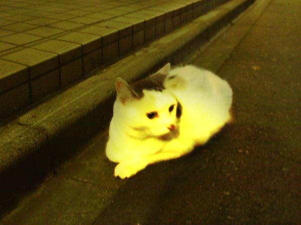 流浪狗 不曾在日本看到