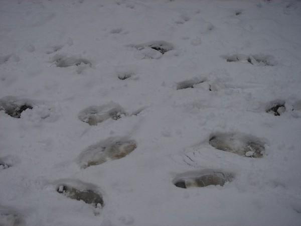雪中的足跡
