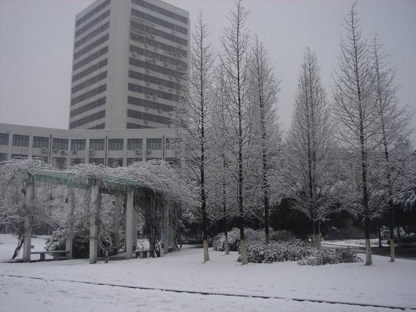 學校的雪景