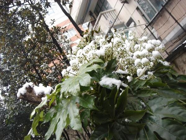 一朵朵白花其實是雪