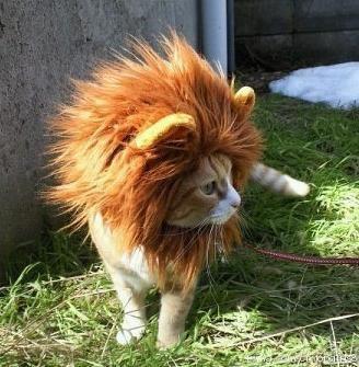 meow.jpg