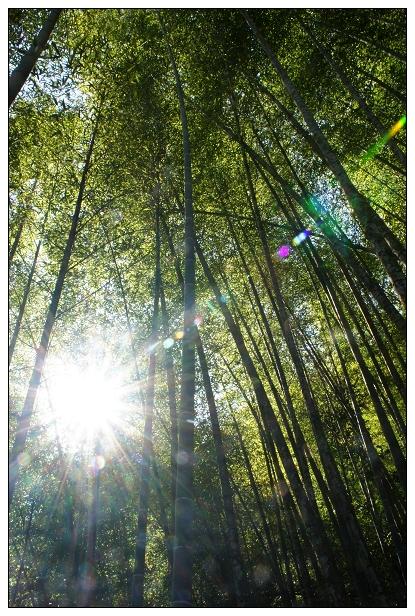 2012春節旅遊台南版-19.jpg