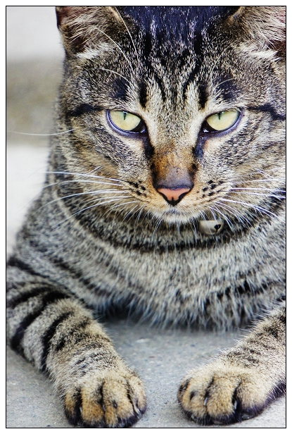 貓咪特寫-01