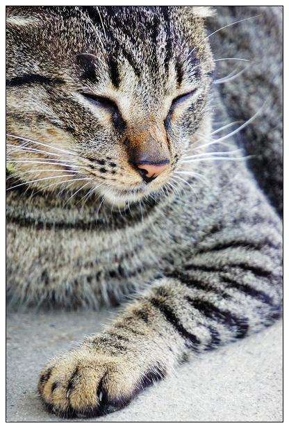 貓咪特寫-02