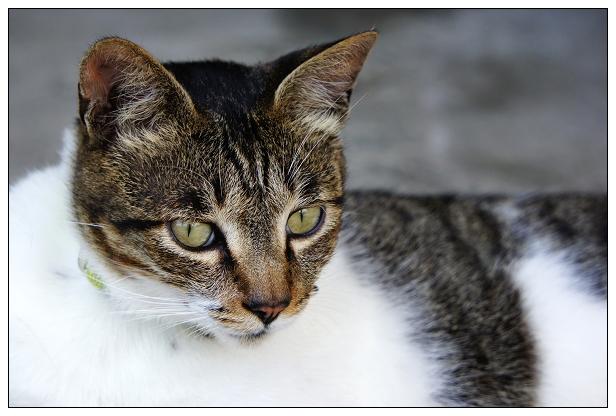 貓咪特寫-05
