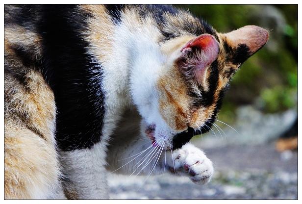 貓咪特寫-06