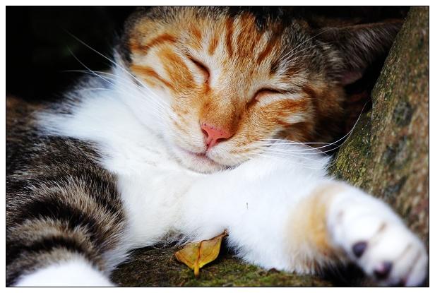 貓咪特寫-07