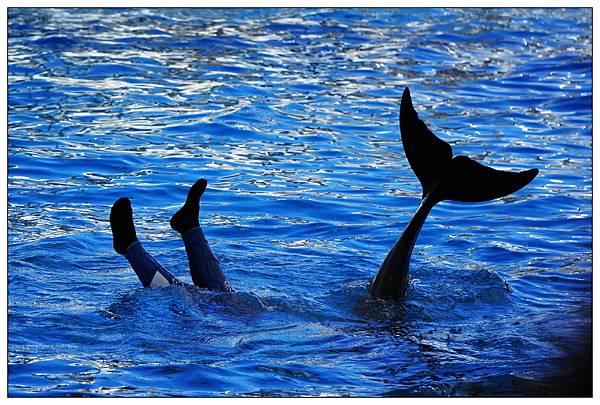 海洋公園-05.jpg