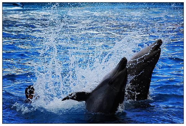 海洋公園-04.jpg