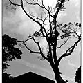 綠雲海-23.jpg