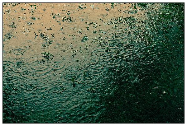 雨中即景-01.jpg
