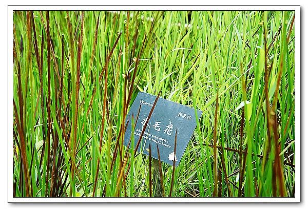 台北植物園-03.jpg
