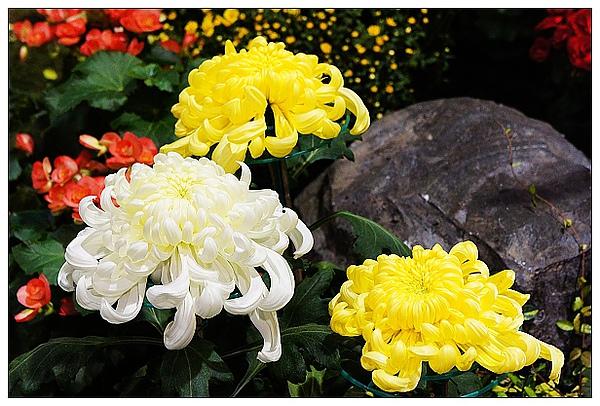 20101114花博-70.jpg