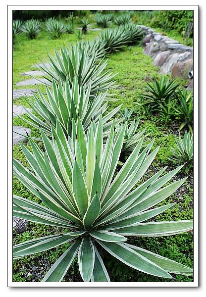 台北植物園-11.jpg