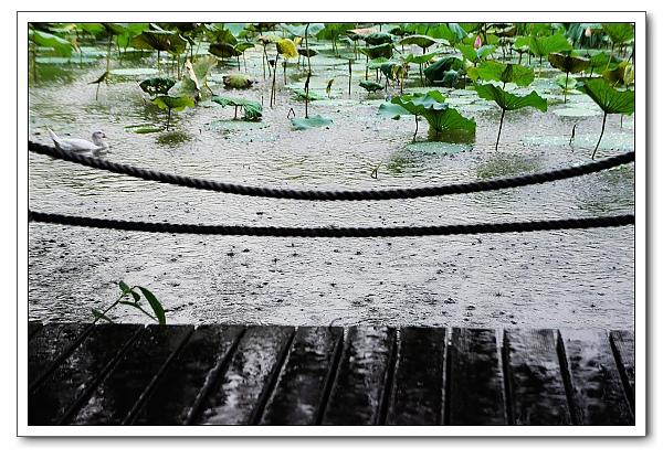 台北植物園-28.jpg