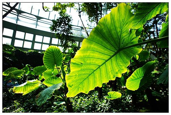 植物園-08.jpg