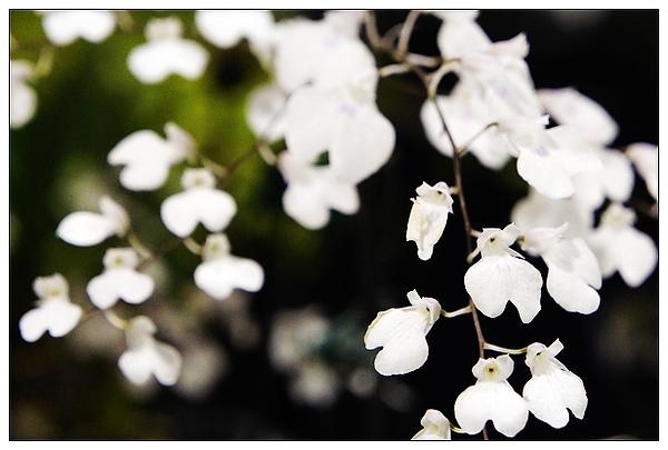 20101114花博-75.jpg