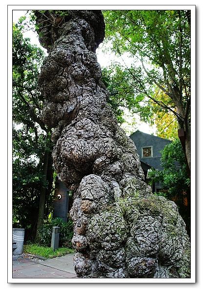 台北植物園-18.jpg