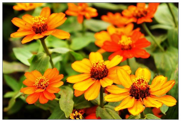 20101114花博-19.jpg