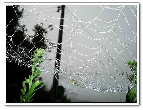 水珠蜘蛛網02.jpg