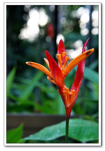 台北植物園-35.jpg