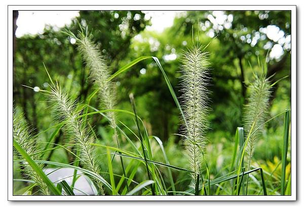 台北植物園-10.jpg