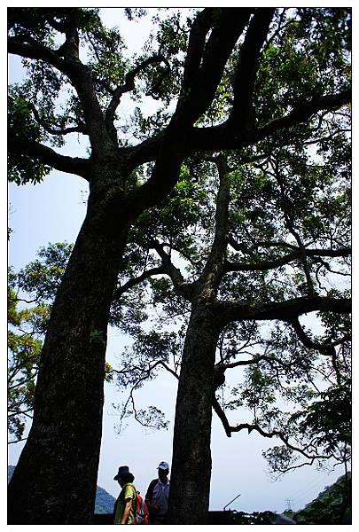 夫妻樹-01.jpg
