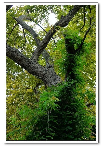 台北植物園-09.jpg